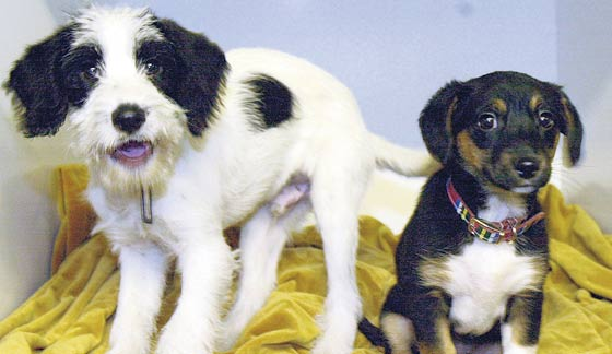 Concerns have been raised about the welfare of dogs in Ashton Dog Pound