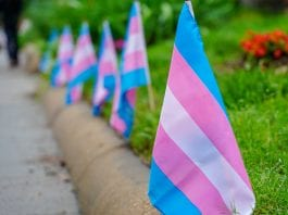 Transgender flags.