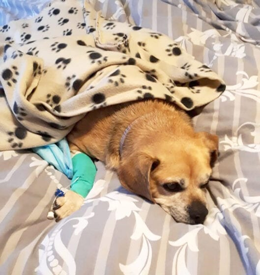 Mindy recovering from surgery