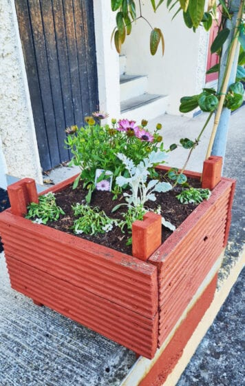 Potted plants Lucan Sarsfield Close